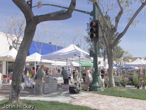 Harvest Fair & Thieve's Market